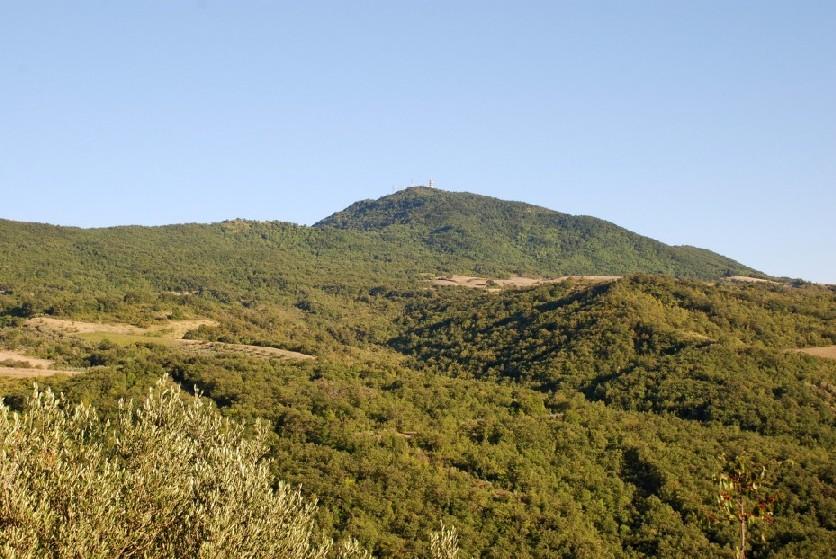 Boschi di Monte Pallano