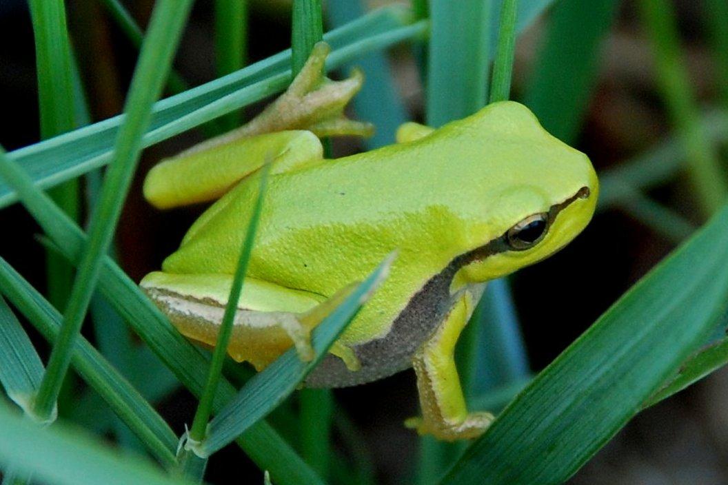 Fauna di Monte Pallano