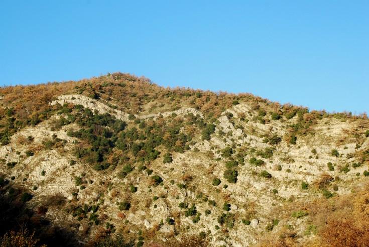 Macchia sempreverde sul Colle Butino