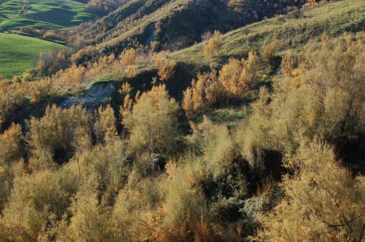 Tamerici in autunno